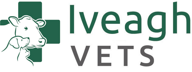 Iveagh Vets